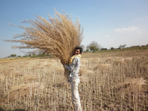Farmer in UP India